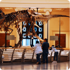 Tourists staring to a dinossaur fossil in a museum of natural science