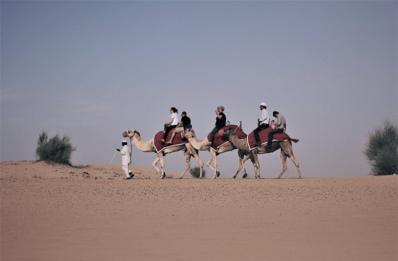 tour, tours, tour guide, tour guides, great, bus, tourist, tourists, tourism, travel, traveling, traveler, travelers. traits, road, riding, camel, desert, dubai, tips
