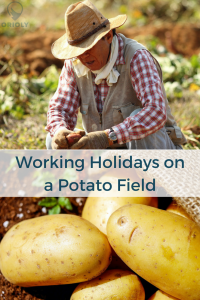 rural tours, working holidays in a farm, working holidays on a potato field, rural tourism, agritourism