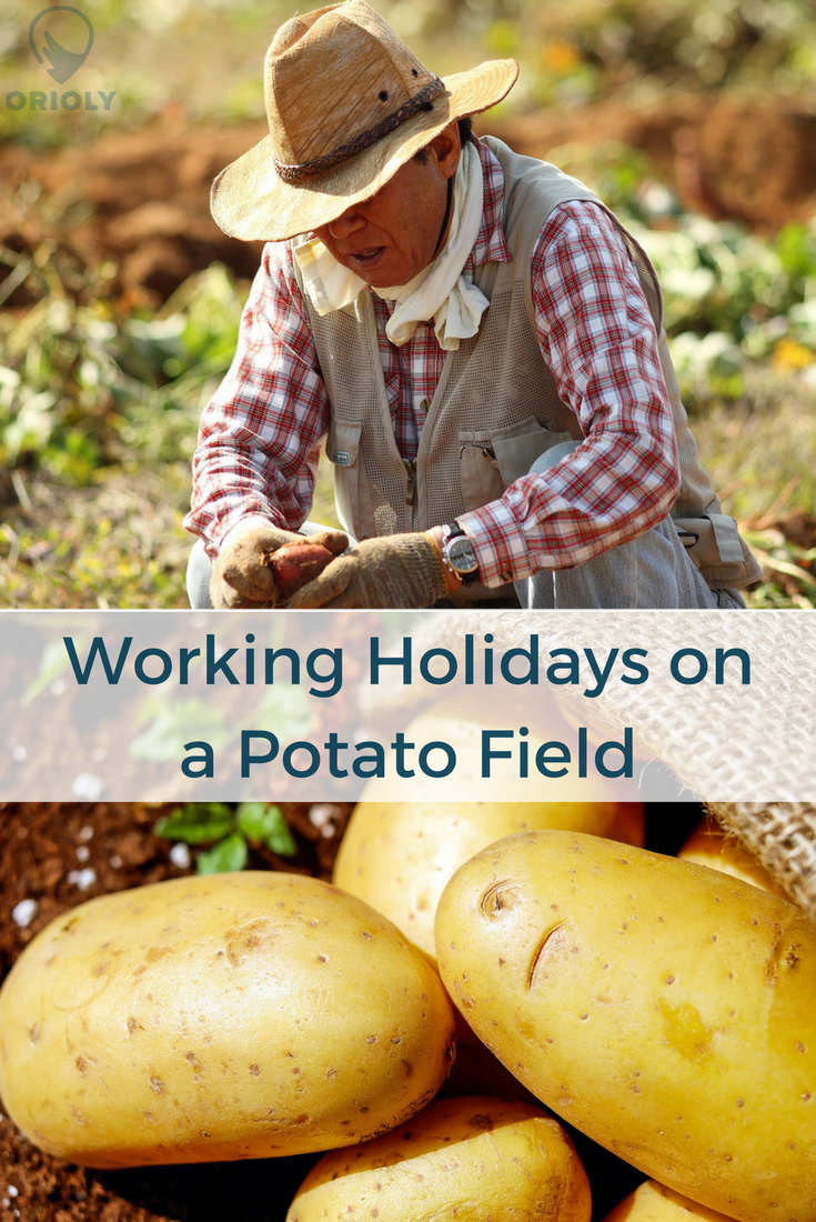 rural tours, working holidays on a farm, working holidays on a potato field, rural tourism, agritourism