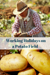 working holidays on a farm, working holidays in the countryside, working holidays on a potato field