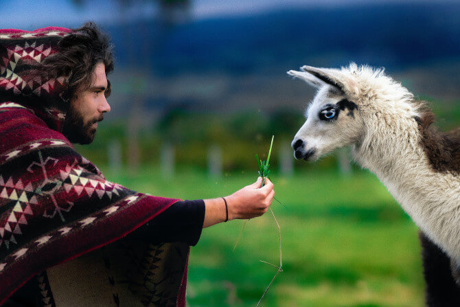 man feeding llama travel photography tips